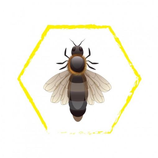 Buckfast Queen Bees