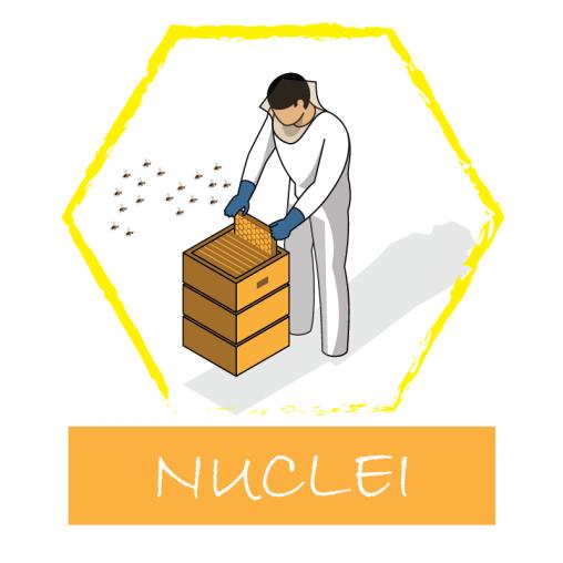 Nuclei d'api su 5 telaini
