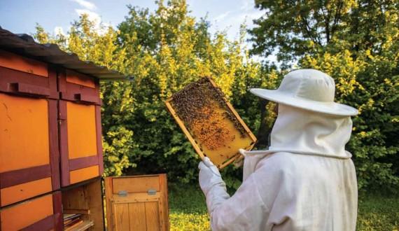 Les règles d'un bon apiculteur