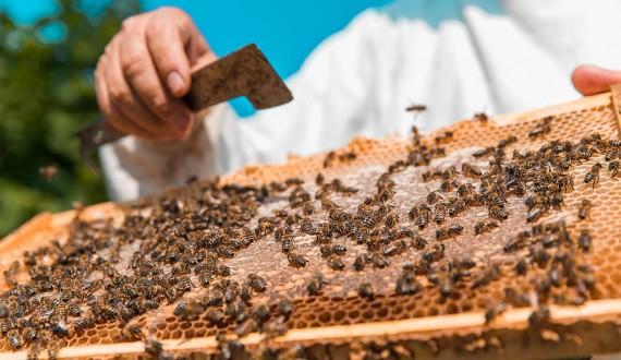 Nuclei e Pacchi d'api