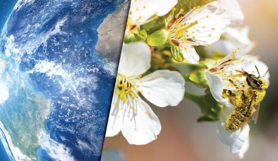 L'importanza delle api per il nostro ecosistema