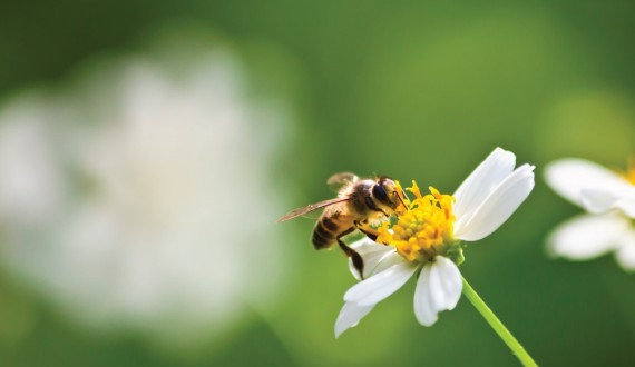 The language of bees: this is how bees communicate