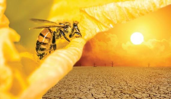 Le api e i cambiamenti climatici