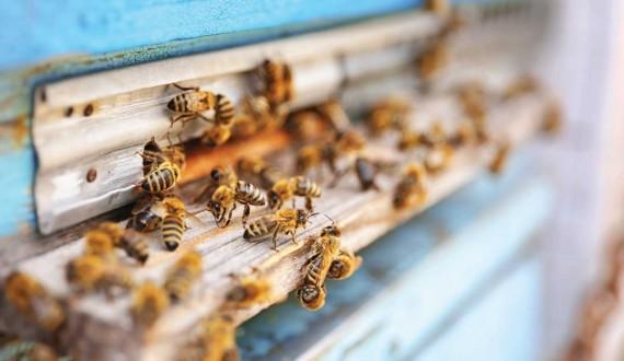 È vero che le api non dormono mai?