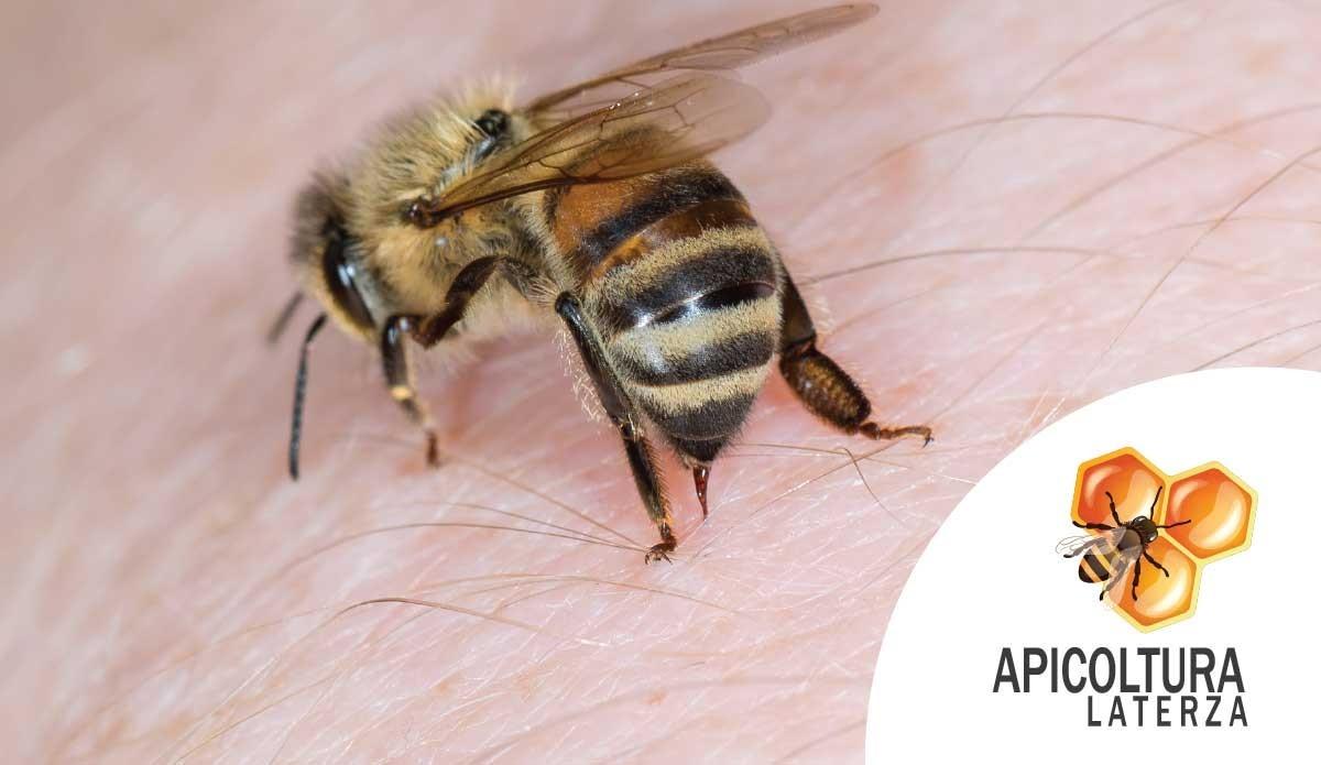 Il pungiglione delle api e quello dell'ape regina: differenze
