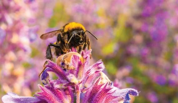 A cosa servono le antenne delle api?